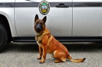 "Bureau of Protective Service's K-9 Officer ""Castor"""